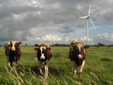 wind turbine and cows